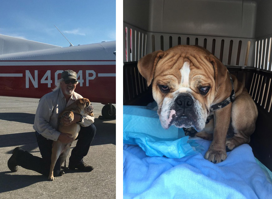 "Dr. Ken Parschauer flies blind dog ""Dougie"" to his new home through Pilots N Paws program"